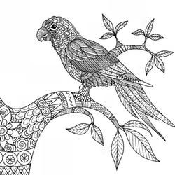 Kolorowanki Dla Dorosłych Papuga Do Wydruku Za Darmo