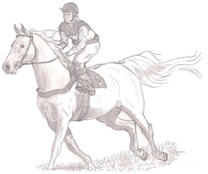 Kolorowanki Dla Dorosłych Konie Do Wydruku Część 3