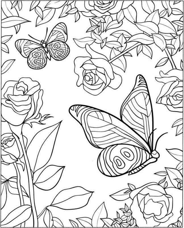 Najbardziej Poszukiwane Motylki Kolorowanka Kolorydladzieci
