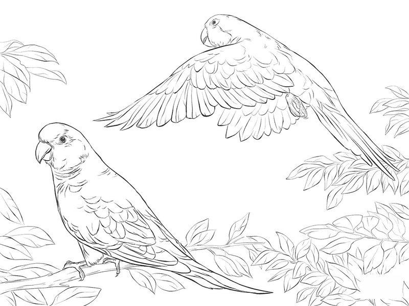 Kolorowanki Dla Dorosłych Papuga Do Wydruku Część 1