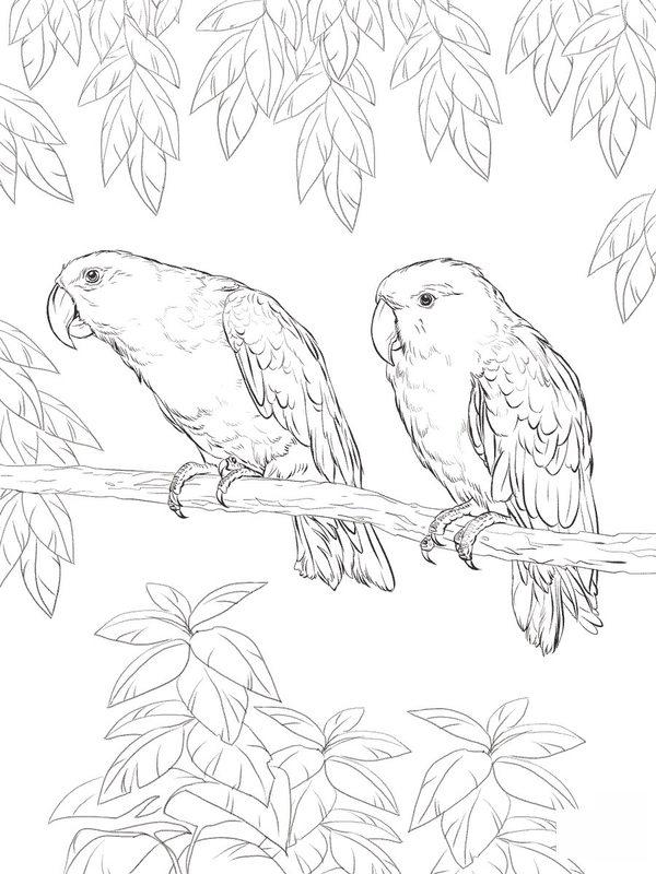 Kolorowanki Dla Dorosłych Papuga Do Wydruku Część 2