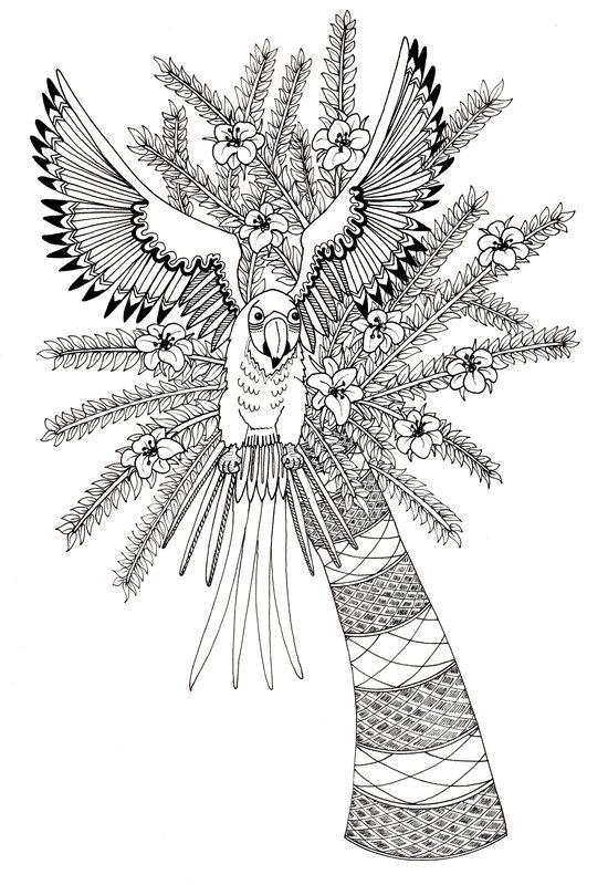 Kolorowanki Dla Dorosłych Papuga Do Wydruku Część 3