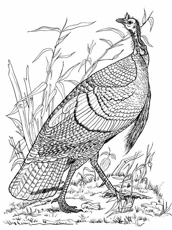Kolorowanki Dla Dorosłych Ptaki Do Wydruku Część 4