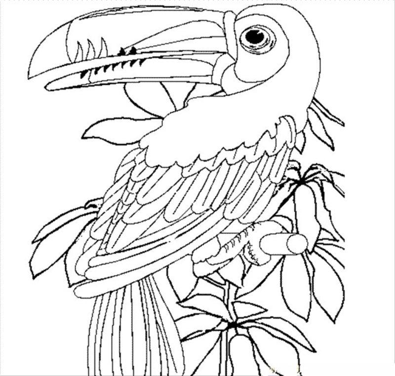 Kolorowanki Dla Doroslych Ptaki Do Wydruku Czesc 5