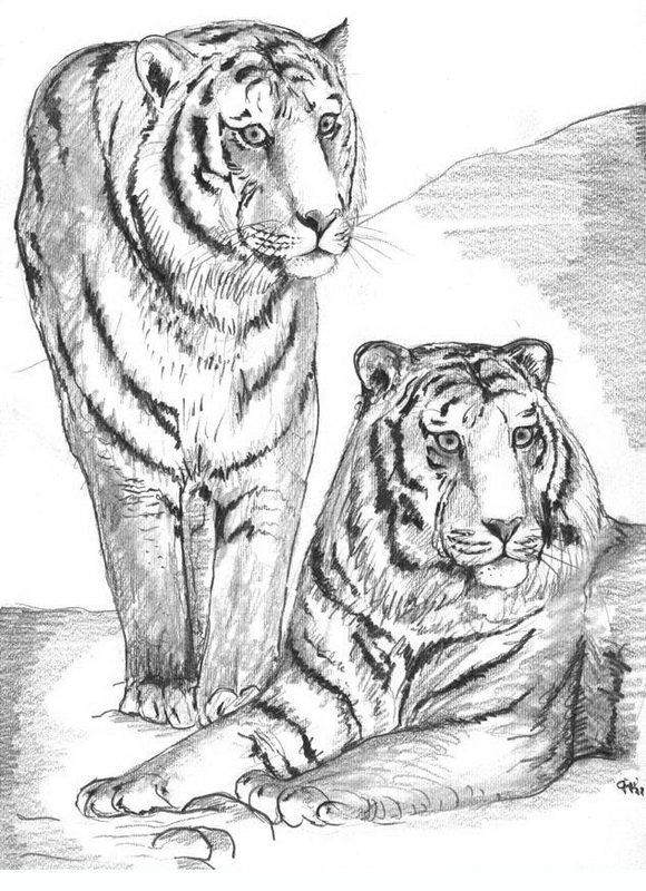 Kolorowanki dla doros ych tygrysy do wydruku cz 2 for Immagini tigre da colorare